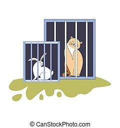 animal, abrigo, gatinho, e, coelhinho, sentando, em, gaiolas
