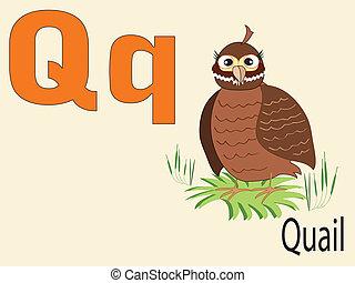 Animal alphabet Q