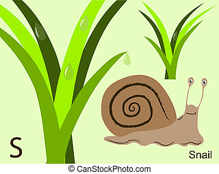 Animal alphabet, S for snail - This is part of the animal ...