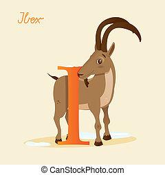 Animal alphabet with ibex