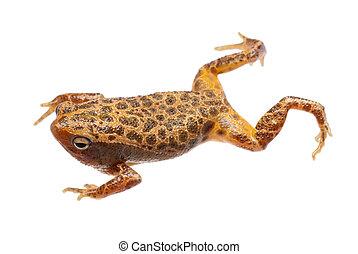 animal amphibian frog