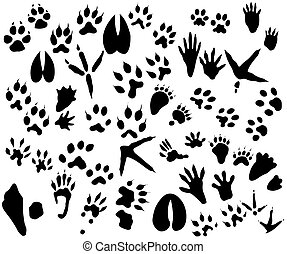 Animal and bird trails - Collection of animal and bird...