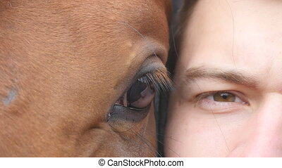 Animal and human eye - horse and man looking together at...