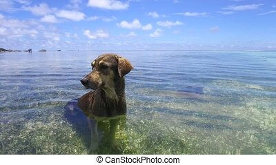 dog in sea or indian ocean water - animal and nature concept...