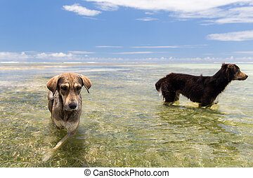 dogs in sea or indian ocean water on seychelles