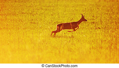 Animal background. Roe-deer - Animal background beautiful...