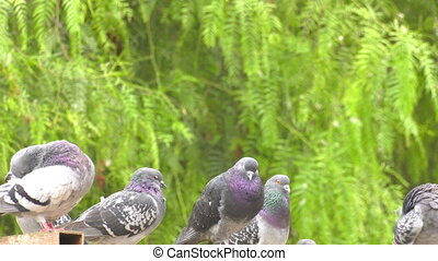 Animal Bird Pigeons Doves in Green Nature