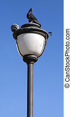 Animal Bird Pigeons on the Street Lamp