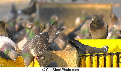 Animal Birds Pigeons Eating