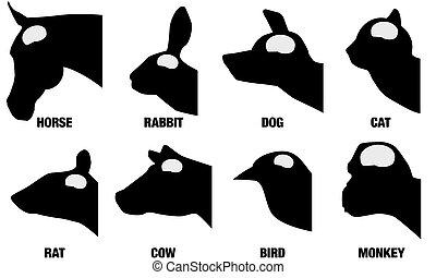 Animal Brain Sizes