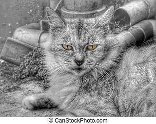 Animal - Cat is sitting looking at the camera