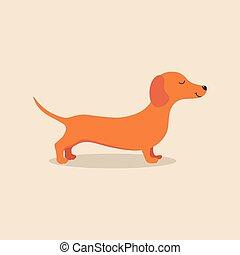 animal, chien basset allemand