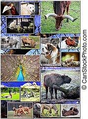 animal, collage