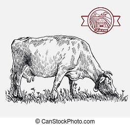 animal, crianza, blanco, cow., ganado, ilustración, ...