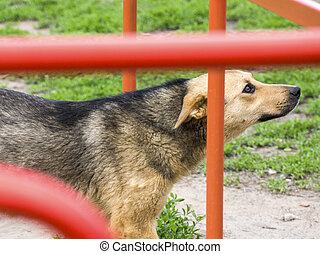 animal, cute, dog, canine, pet, doggy, terrier