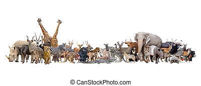 animal, de, el mundo