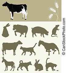 animal, de, um, fazenda