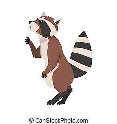 animal, dessin animé, forêt, vue, caractère, raton laveur, debout, vecteur, mignon, côté sauvage, adorable, illustration
