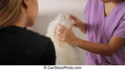 Animal Doctor Visiting Dog And Checking Teeth Mouth - People...