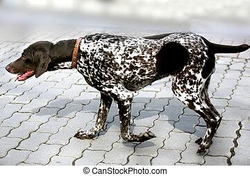 animal dog dalmatian pet