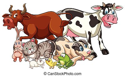 Animal - Domestic animals on a white background