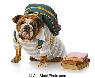 animal education - english bulldog wearing striped shirt and...