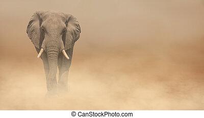 Animal elephant during a sandstorm.