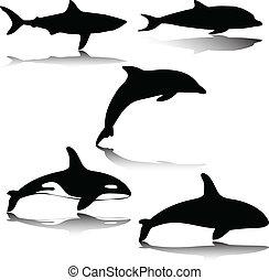 animal, en, mar, ilustración