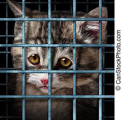 animal estimação, adoção