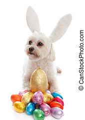 animal estimação, cão, animal, com, ovos páscoa
