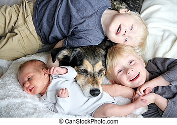 animal estimação, cão, três, cama, snuggling, filhos jovens, feliz