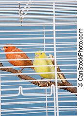 animal estimação, pássaros