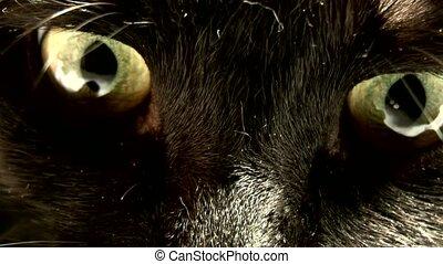 Animal Eye,