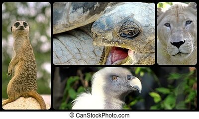 Animal faces, montage