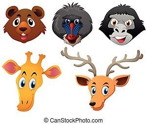Animal faces on white background