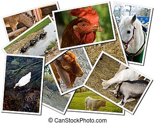 Animal farm postcards on white