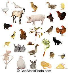 Animal farms on a white background