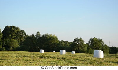 animal feed haystack - polythene wrapped grass bales...