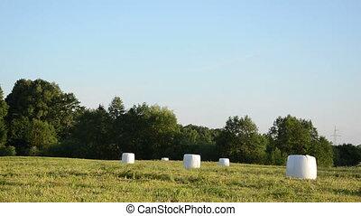 animal feed haystack