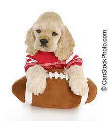 cocker spaniel puppy wearing red jersey with paws on football