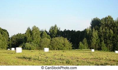animal fodder bales - Panorama of polythene wrapped grass...