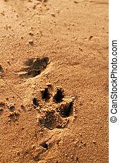 Animal foot print - Photo of an animal foot print on the...