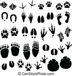 A set of animal footprint in vector.