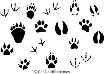 Animal footprints and tracks isolated on white for wildlife...