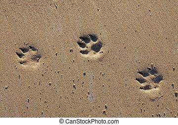 Animal footprints in sand - Animal footprints in the sand, ...
