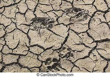Animal Footprints On Desolate Barren Dry Cracked Soil