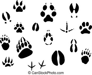 Animal footprints - Set of animal footprints for ecology ...