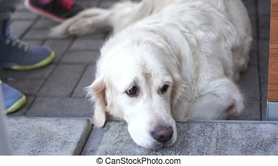 animal-friendly cafe - the dog is resting in a cafe waiting for the hosts