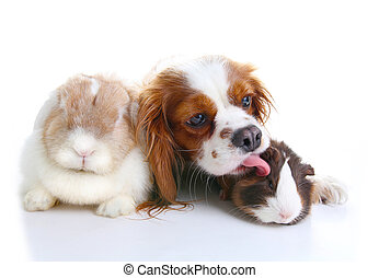 Animal friends. True pet friends. Dog rabbit bunny lop animals together on isolated white studio background. Pets love each other.