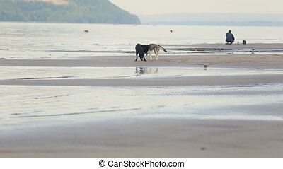 animal Friends - two dogs playing on the beach